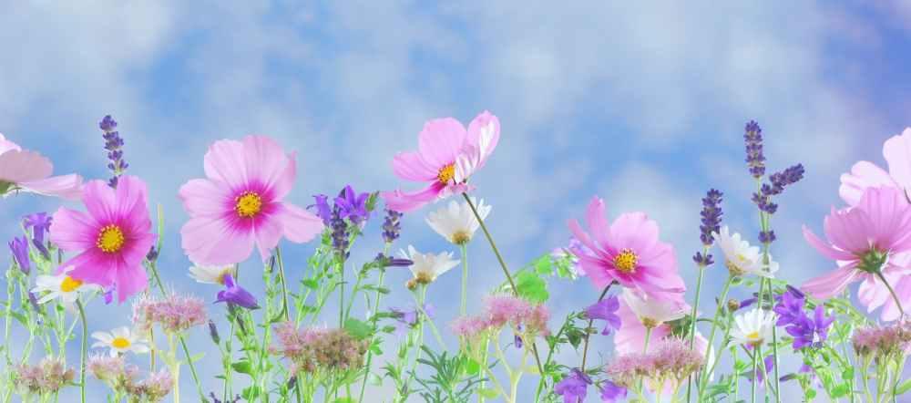 wild-flowers-flowers-plant-macro-40797.jpeg